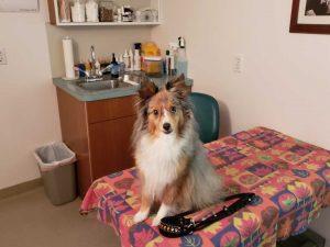 happy vet visit! dog on exam table at vet office