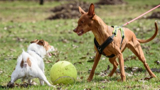 Surviving an off leash dog attack.