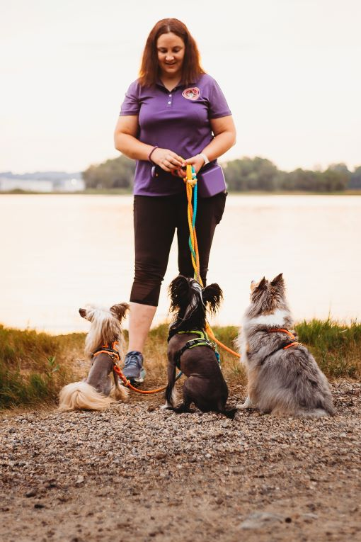Dog Trainer South Kingstown Rhode Island