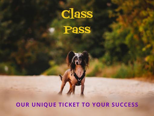 Dog Training Class Pass