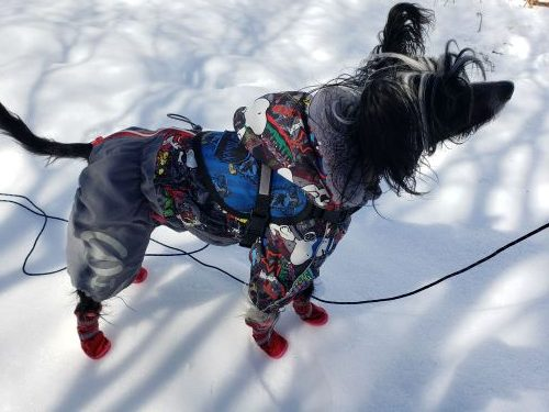 Dog Training in Cold Weather Made Better