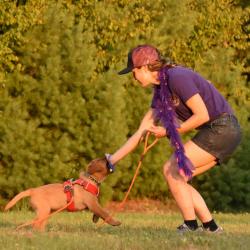Puppy Day Training