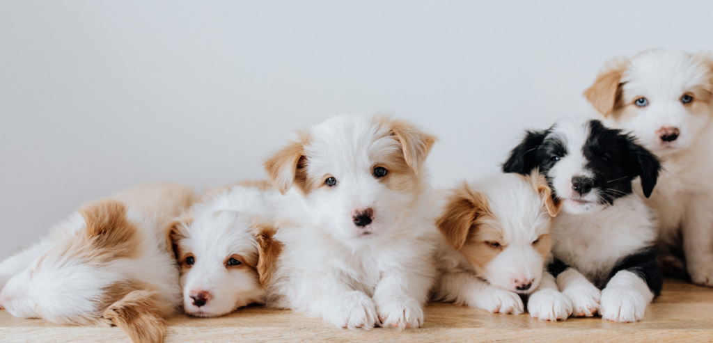 Choosing the Right Puppy!