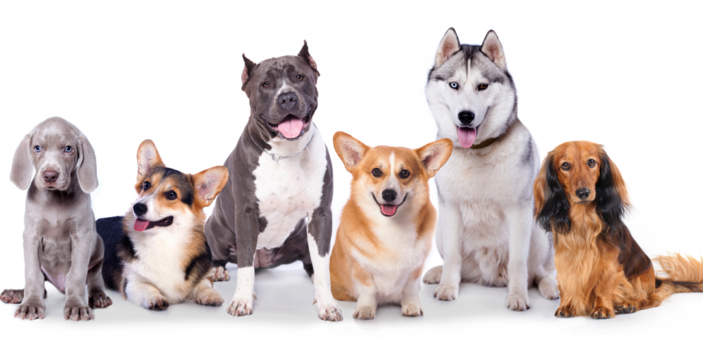 choosing the right breed of dog