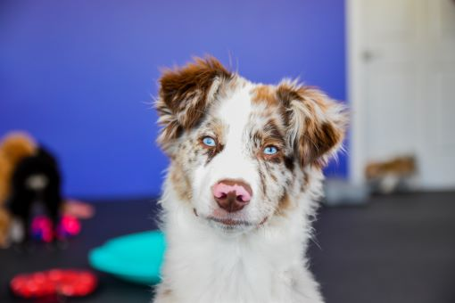 Doggy Day Care Rhode Island