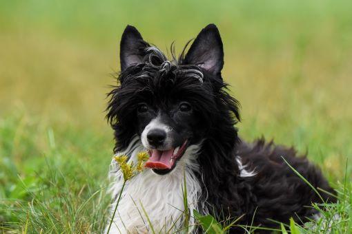 dog daycare exeter, RI
